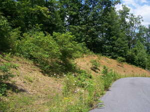 Land for Sale, ListingId:53462007, location: Lots 1 - 11 Dogwood Summit Boone 28607