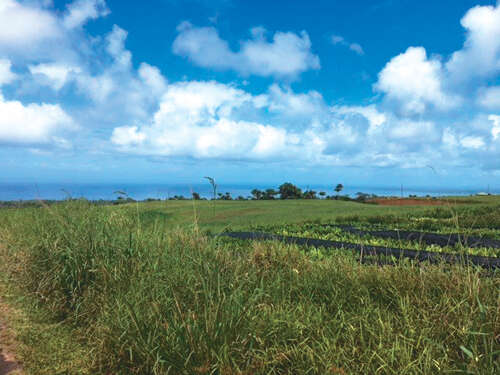 Land for Sale at Lot #: 24-B Lot #: 24-B Lot #: 24-B Lot #: 24-B Lot #: 24-B Papaikou, Hawaii 96781 United States