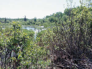 Land for Sale, ListingId:37931518, location: SW-25-74-6-W6 Sexsmith T0H 3C0