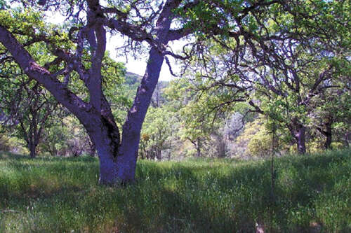 Land for Sale at 0 Vineyard Canyon Road San Miguel, California 93451 United States