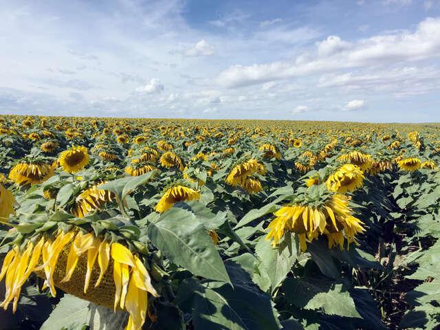Investment for Sale at Bennett County Farmland Martin, South Dakota 57551 United States