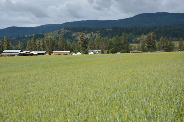 Featured Property in ARMSTRONG, BC,