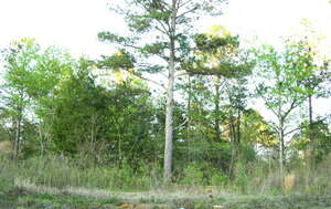 Land for Sale, ListingId:34364632, location: Lot 6 N Sweetwater Moultrie 31776