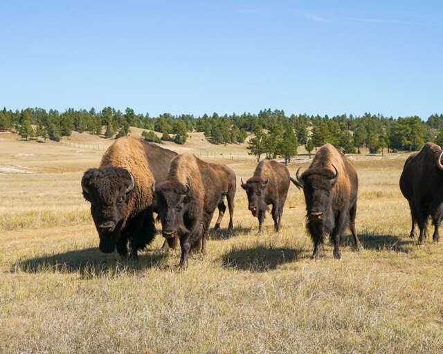 Investment for Sale at Stone Meadow Ranch Custer, South Dakota 57730 United States