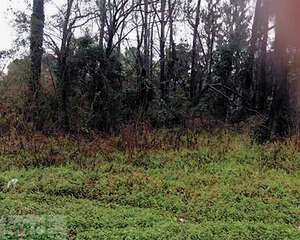Land for Sale, ListingId:31468432, location: 2309 Old Shell Road Savannah 31404