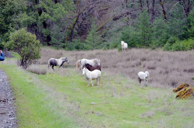 Additional photo for property listing at 468 West Pine Ridge West Road  Ukiah, California 95482 United States