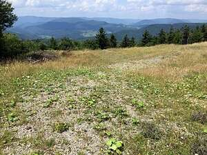 Real Estate for Sale, ListingId: 47284684, Snowshoe, WV  26209