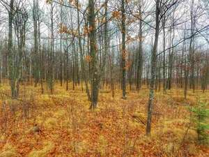 Land for Sale, ListingId:55159756, location: TBD Victoria Park Addition Iron Mountain 49801