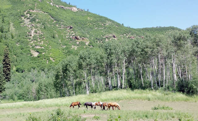 Land for Sale at 25500 Routt County Road 45z Oak Creek, Colorado 80467 United States