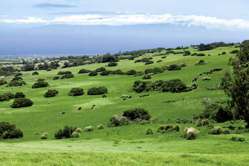 Land for Sale at Honoipu/Puuhue Rd Hawi, Hawaii 96719 United States