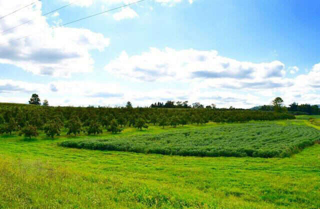 Investment for Sale at Lot #1 Carlisle Rd Aspers, Pennsylvania 17304 United States