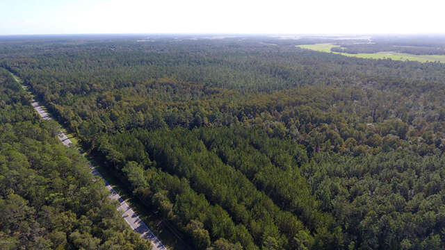 Land for Sale at 0 Highway 318 Citra, Florida 32113 United States