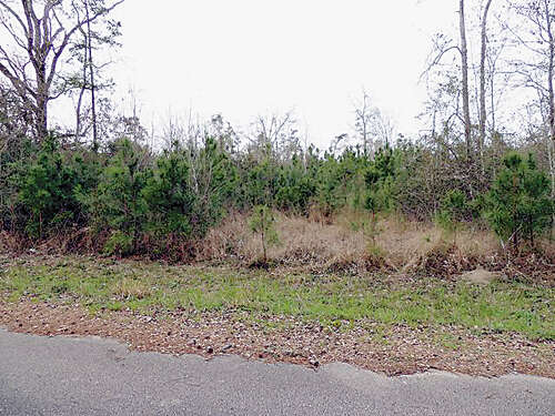 Land for Sale at 29615 Fm 2978 @ Swiney Magnolia, Texas 77354 United States