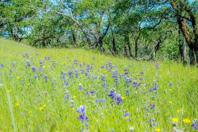 Land for Sale at 930 Shiloh Oaks Road Windsor, California 95492 United States