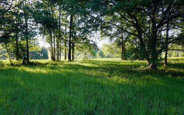 Land for Sale at Hwy 136 Live Oak, Florida 32060 United States