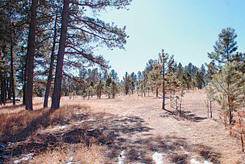 Real Estate for Sale, ListingId:35600698, location: TBD Last Stand Road Custer 57730