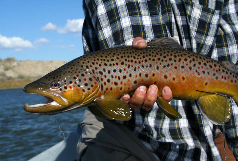 Additional photo for property listing at North Platte Fly Fishing Ranch  Casper, Wyoming 82604 United States