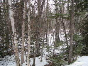 Land for Sale, ListingId:43955895, location: 6426 - Twp Rd 544A Darwell T0E 0L0
