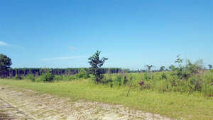 Featured Property in Lee, FL 32059