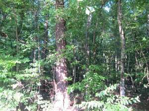 Land for Sale, ListingId:34835013, location: 0 PINEDALE RD Terry 39170
