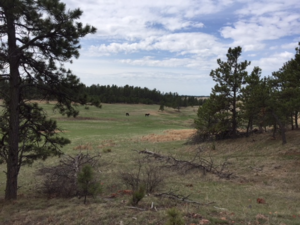 Featured Property in Pringle, SD 57773