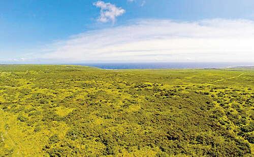 Additional photo for property listing at Ka'Alu'Alu Road  Naalehu, Hawaii 96772 United States