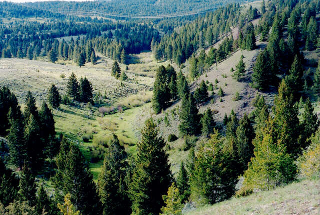 Land for Sale at Elk Meadows Townsend, Montana 59644 United States