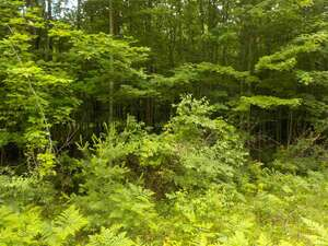 Land for Sale, ListingId:52734554, location: 00 Hidden Hills Houghton Lake 48629