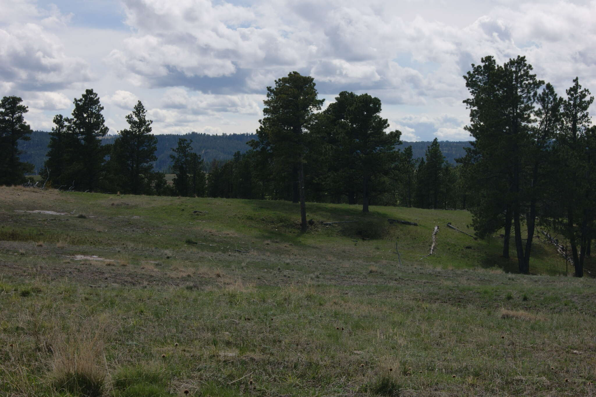 Investment for Sale at 664 Rifle Pit Rd Sundance, Wyoming 82729 United States