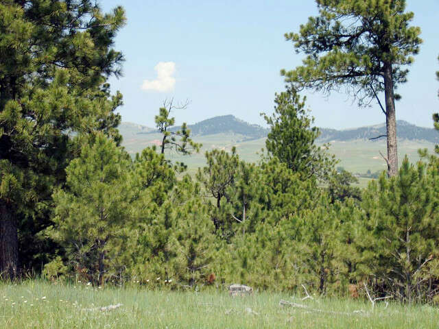Additional photo for property listing at Tbd Remington Rd.  Sundance, Wyoming 82729 United States