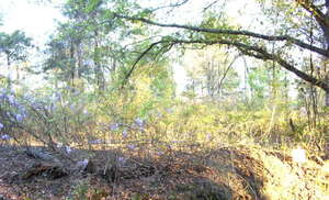 Land for Sale, ListingId:34364638, location: Lot 3 Sweetwater Moultrie 31776