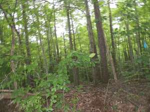 Land for Sale, ListingId:48729176, location: Lot 4 Seven Oaks Drive Clarksville 23927
