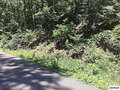 Real Estate for Sale, ListingId:45632493, location: Parcel 117 Hidden Valley Road Gatlinburg 37738