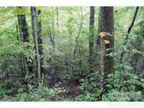 Land for Sale, ListingId:56073569, location: 150 Ivy Road Newland 28657
