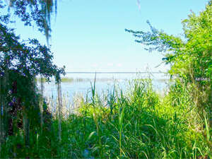 Featured Property in Enterprise, FL 32725