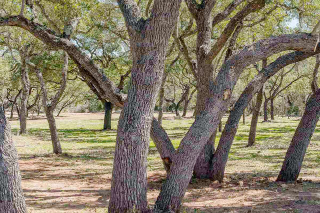 Single Family for Sale at 2936 Ranch Road 1323 Johnson City, Texas 78636 United States