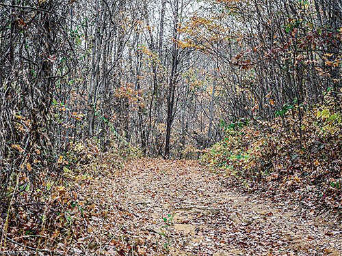 Land for Sale at 9999 Ox Creek Road Weaverville, North Carolina 28787 United States
