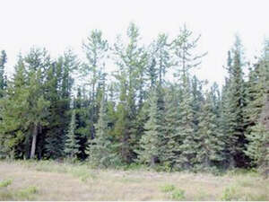 Land for Sale, ListingId:40648335, location: Lot 5 - The Ranch 17-71064 Twp Rd 722 County of Grande Prairie T8V 2Z9