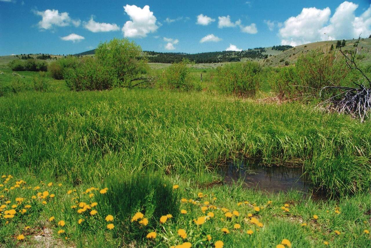 Investment for Sale at Sherlock Creek Quarter Townsend, Montana 59644 United States