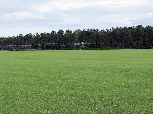 Land for Sale at 3801 Glory Quincy, Florida 32352 United States