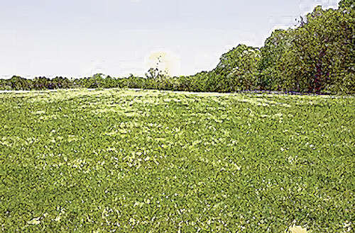 Land for Sale at Rome Rd Deer Lodge, Tennessee 37726 United States