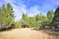 Real Estate for Sale, ListingId:48534481, location: 3180 W Pine Lakes Prescott 86305