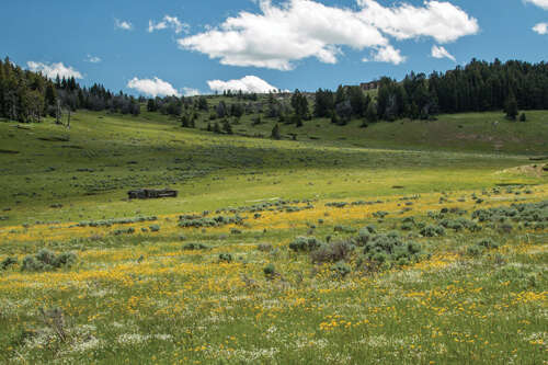 Investment for Sale at Indart Ranch Buffalo, Wyoming 82834 United States