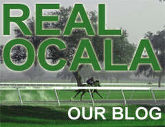 Real Ocala Blog