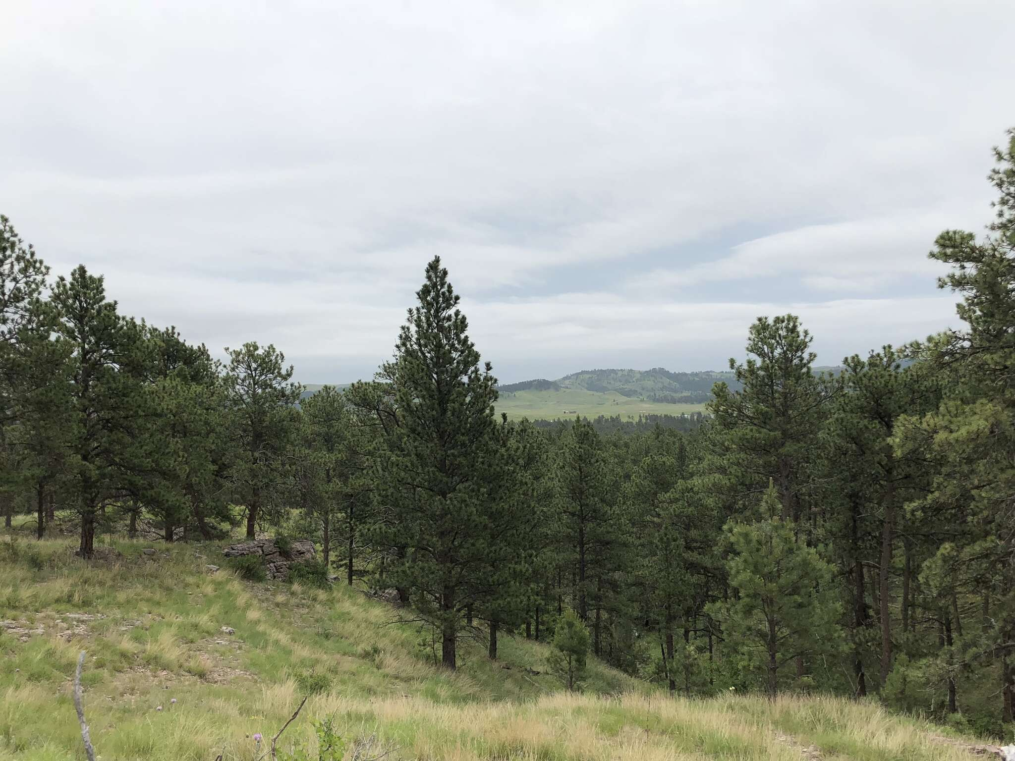 Investment for Sale at Tbd Windridge Road Hot Springs, South Dakota 57747 United States