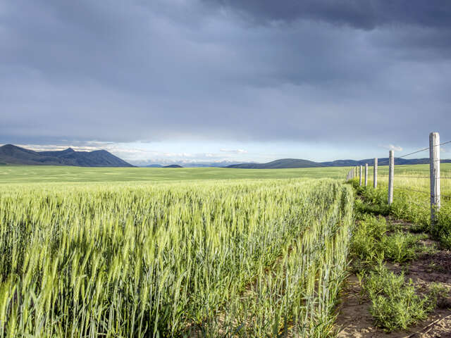 Land for Sale at Tbd Wheatland Road Three Forks, Montana 59752 United States
