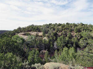 Featured Property in Dove Creek, CO 81324