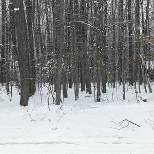 Land for Sale, ListingId:55694066, location: Whispering Pines Gaylord 49735